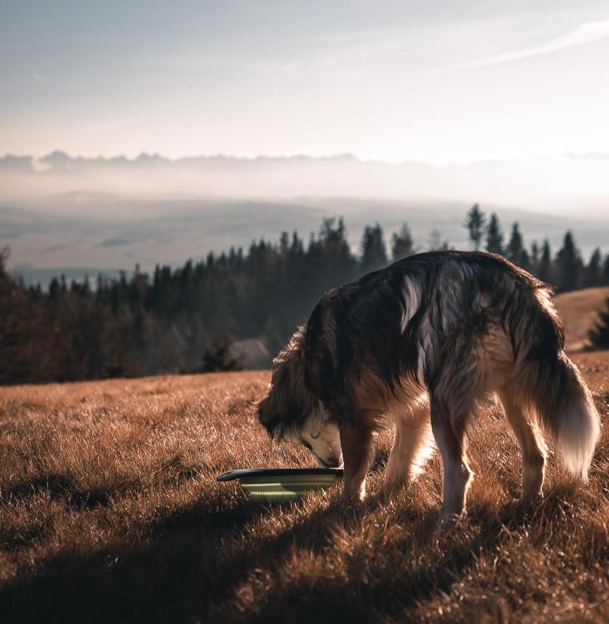 Pies na tle Tatr