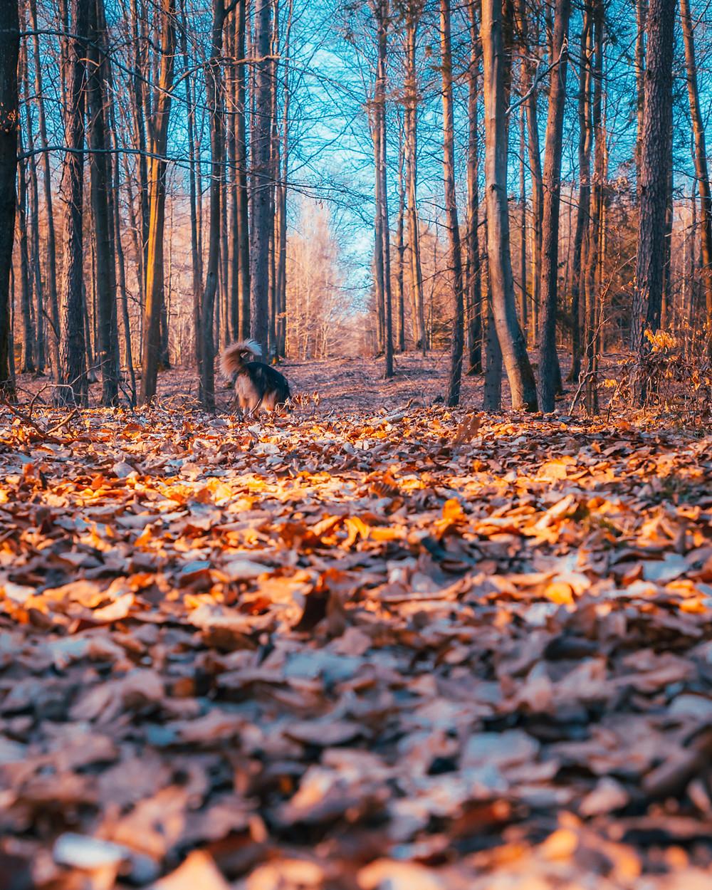 Kundelek w lesie