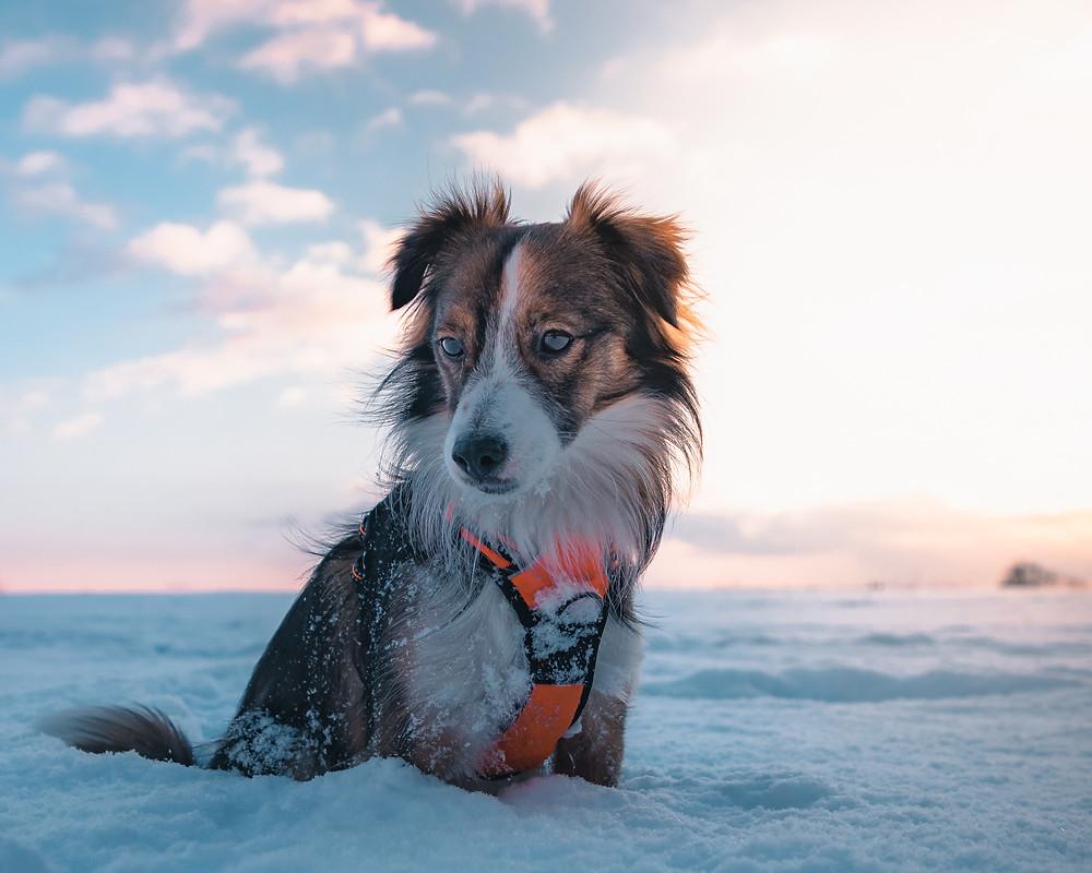 Psiak w zimie