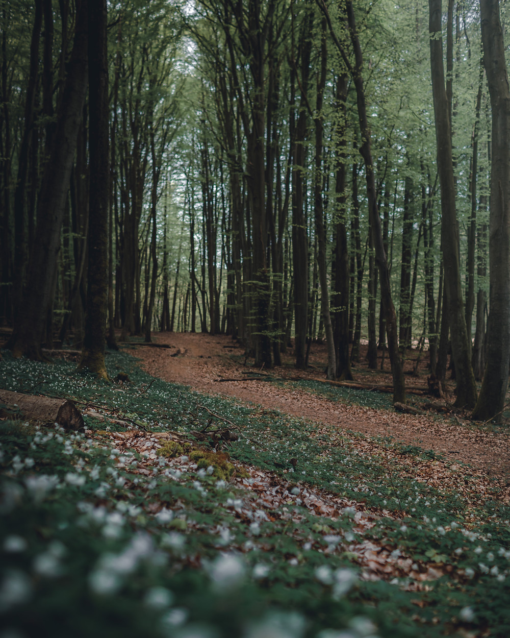 Parko narodowy Jasmund las