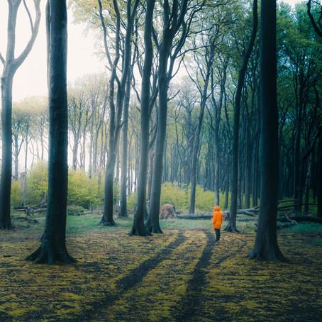 Co straszy w Lesie Duchów?