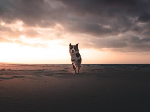 Jak zrobić niezapomniane zdjęcia twojemu psiakowi! 7 porad!