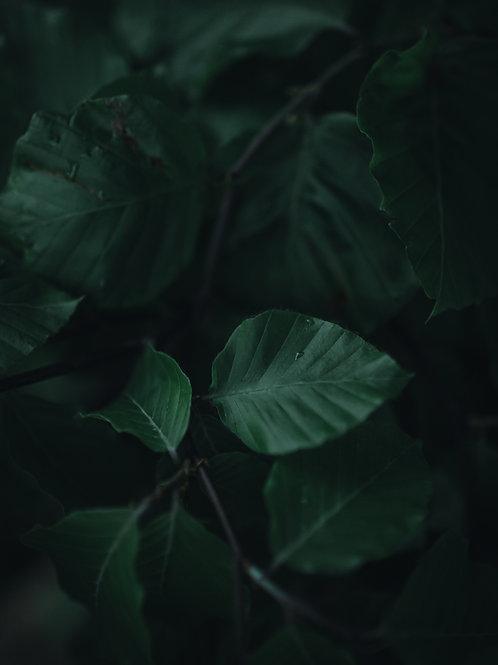 Kaszubskie liście
