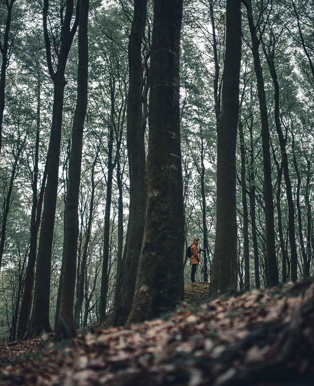 Lasy w Jasmund