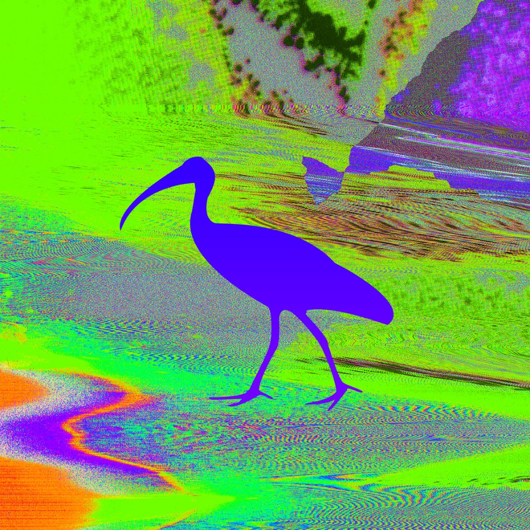 Ibis Blue Green 72dpi_edited