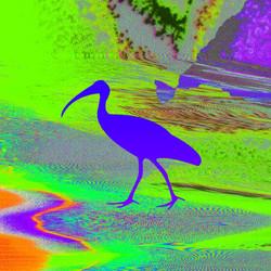 Ibis Blue Green 72dpi_edited