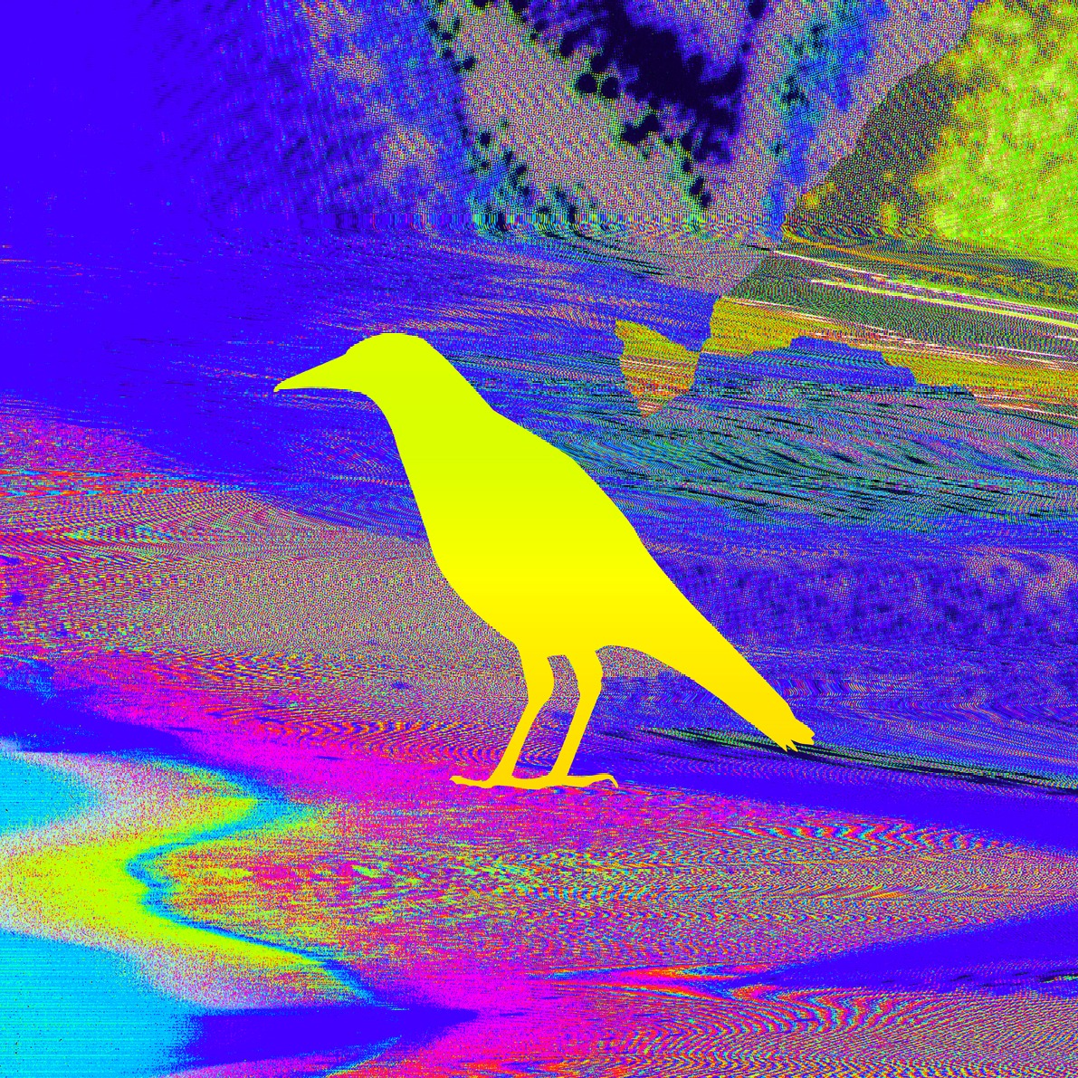 Magpie Yellow Blue 72dpi_edited