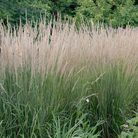 Karl Forrester Grass