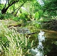 San Pedro river 2.PNG