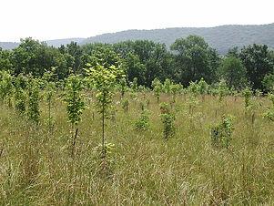 ee0127-treeplantingsuccess-fig1plantedpa
