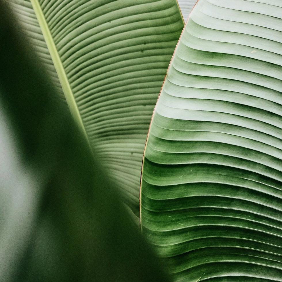 plant-green-plants-tropical-lines-backgr