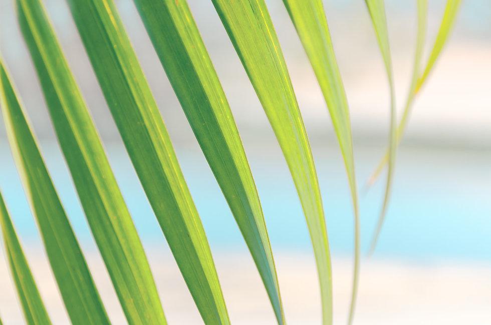 blurred-photo-green-leaf-of-palm-tree-ag