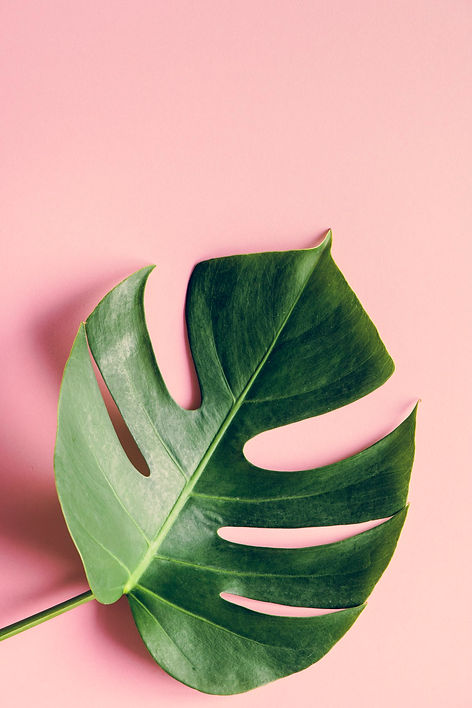 tropical-leaf-on-pink-background-PF9ZYHJ