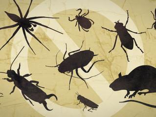Avoiding Pesky Apartment Pests