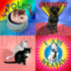 PET PORTRAITS.jpg