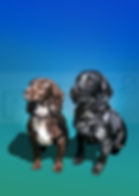 BELLA&MAORI3.jpg