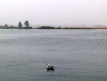 Why You Should Paddle on Overcast Days