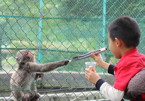 阿蘇 猿 猿まわし エンタメ 劇場 観光