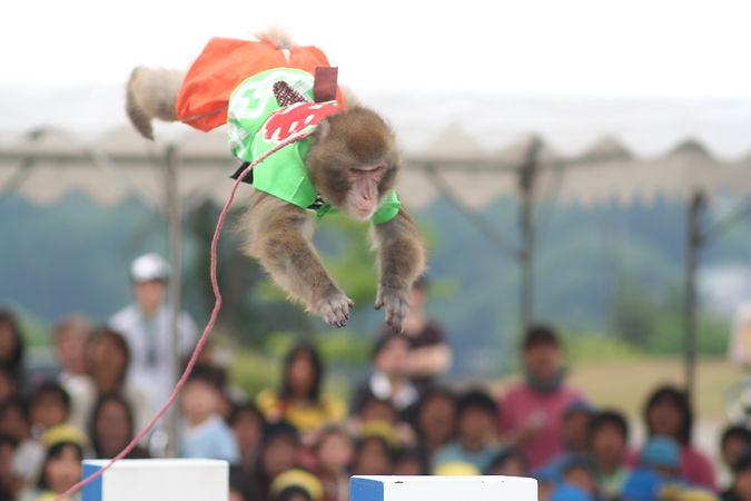 4 猿まわし十八番芸 八艘飛び.JPG