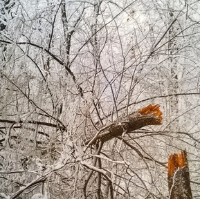 Photograph Branch in Snow