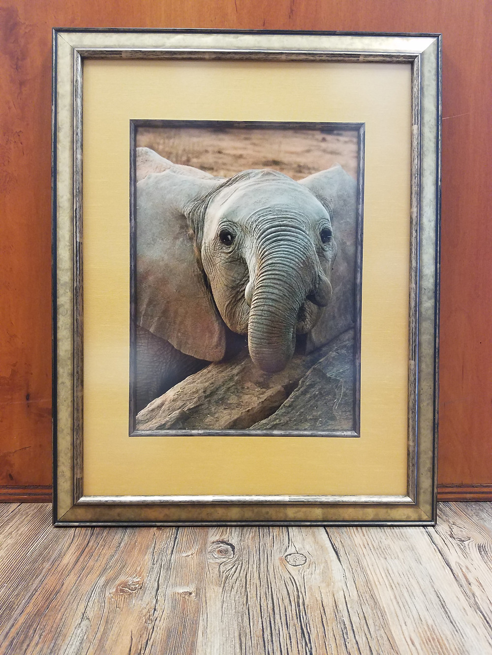 Elephant photo framed with filet and refection control glass