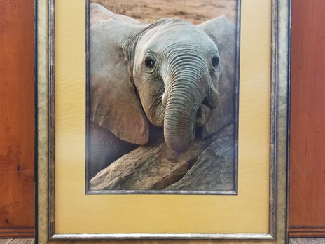 Baby Elephant: Framed!
