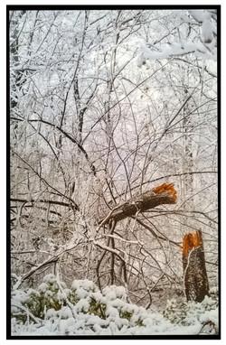"Rodrigo Gaby, ""Branch in Snow:"