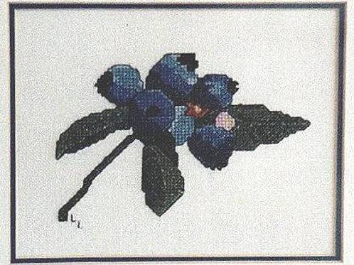 Blueberries | Northern Pine Designs