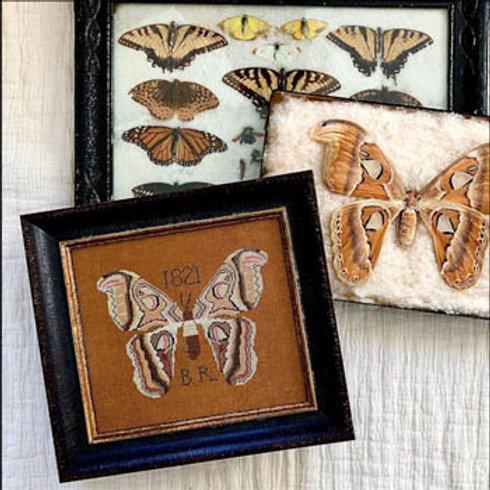 B.R.'s Moth | Kathy Barrick