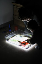 Malwina Kocoń - panel świetlny