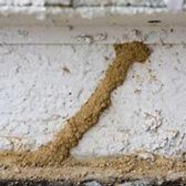 subterranean-termite-mud-tubes