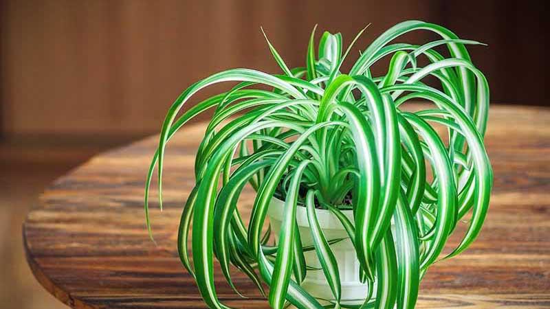 Plantas para oficinas en casa