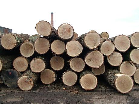 oak-logs-1511548.jpg