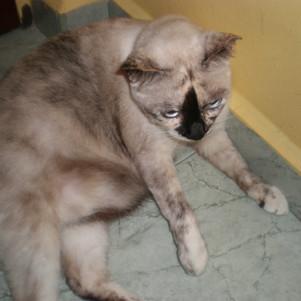 Violet 2011