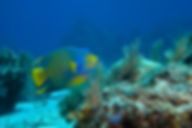 Fish on Reef.JPG