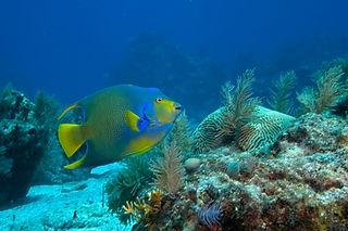 Fish on Reef.JPG