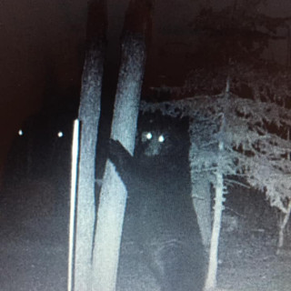 little bear standing.jpg