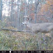 nice buck.jpg