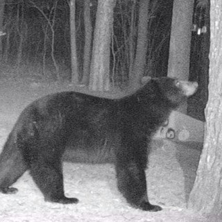 big bear 1.jpg