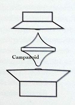Campanoid_c.jpg