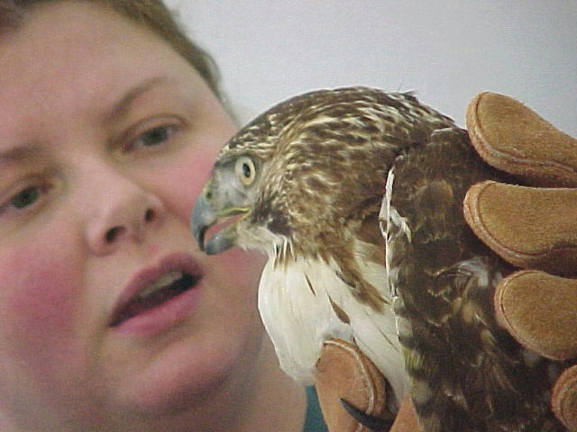 Anita and Hawk.JPG
