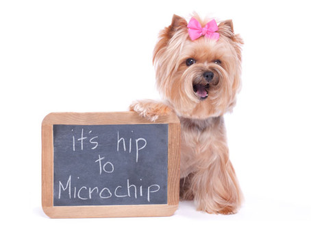 Everything you need to know about Microchips