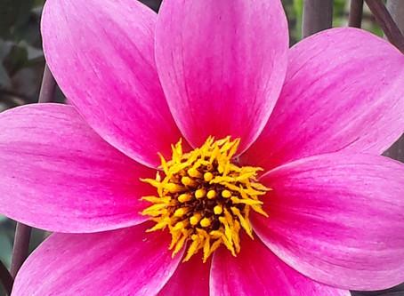 Kitchen Garden Live at Hampton Court Flower Show