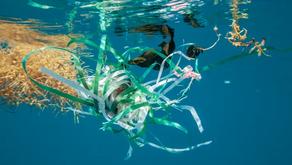 Ingestão de plástico já foi registrada em mais de 1,5 mil espécies animais