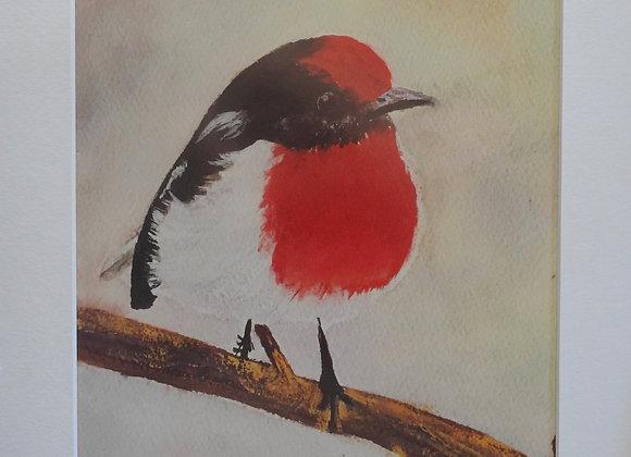 Red Robin - Australian Bird