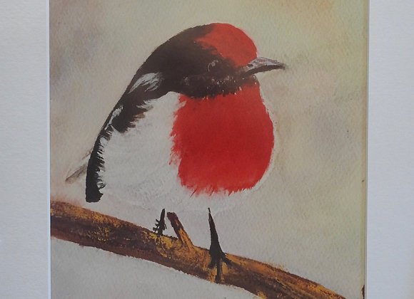 Australian Red Robin