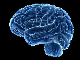 brain6_edited.png