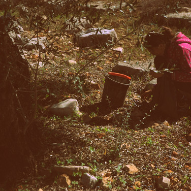 Dier Istiya, Salfit, Palestine