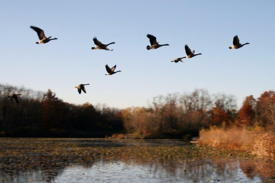 Осень перелетные птицы фото