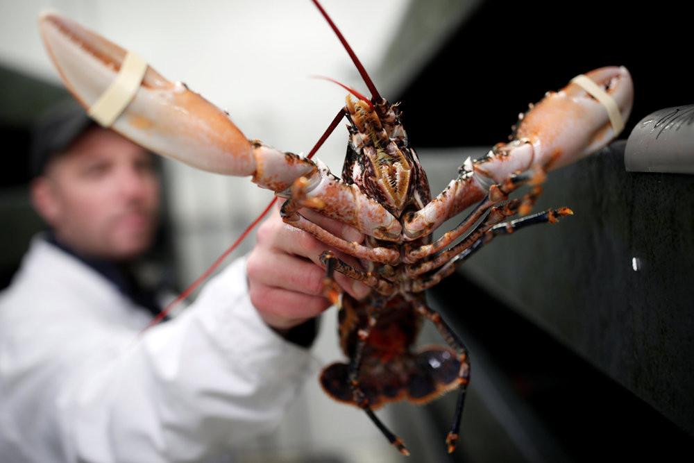 Где сегодня купить омаров? И, главное, сколько это будет стоить? Фото: Reuters